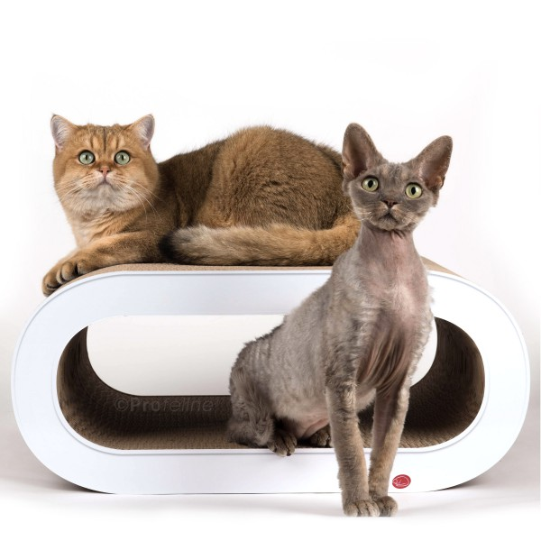 cat-on Oculus white