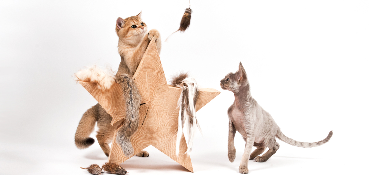 Organic Cat Toys