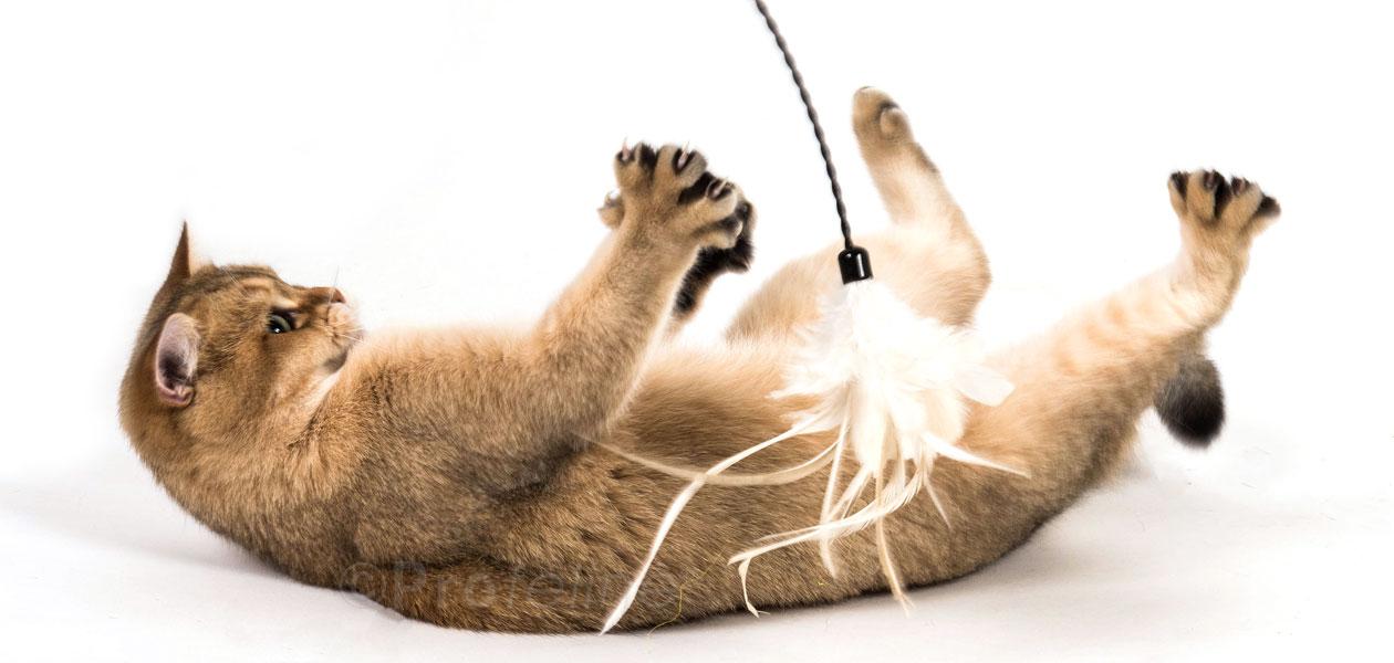 Waggler Cat Wands