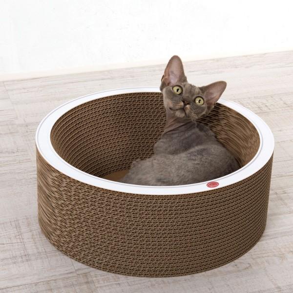 cat-on Bowl