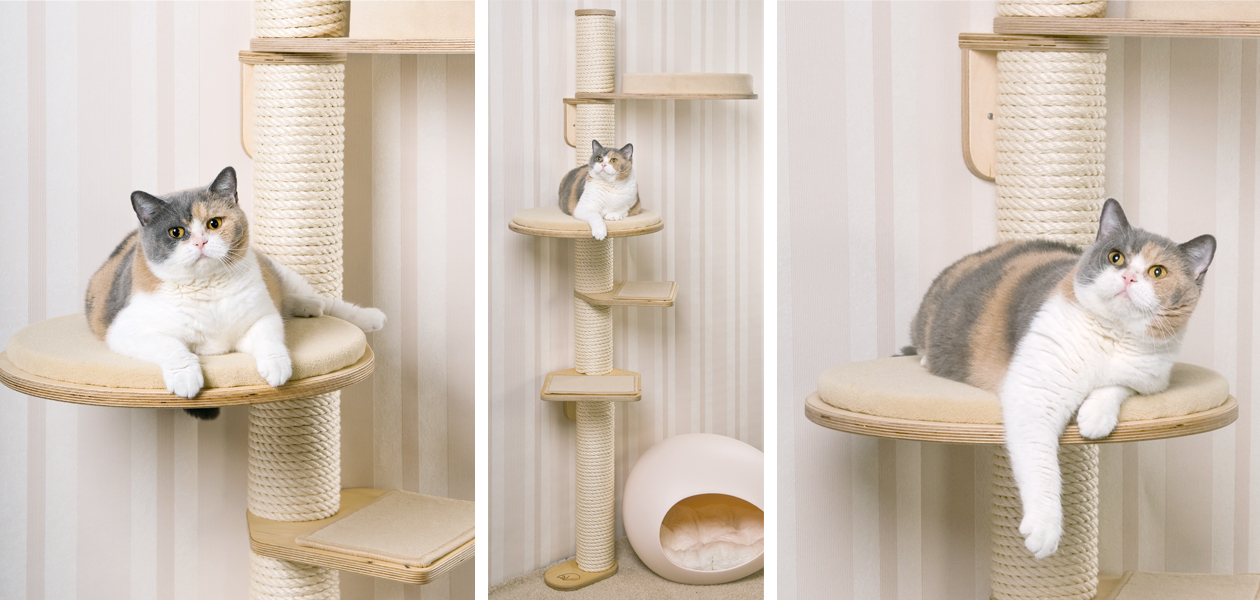 Cat Trees with Wall Support