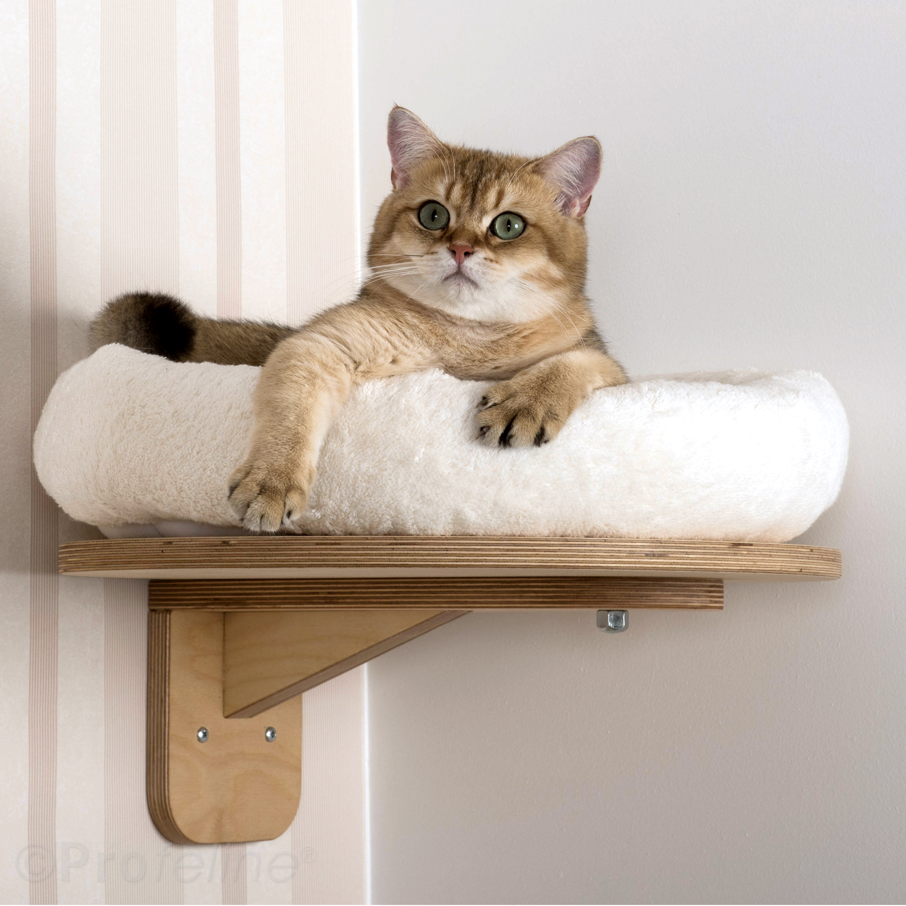 wall mounted with top level platform ae2 wall lounger cat furniture profeline cat supplies. Black Bedroom Furniture Sets. Home Design Ideas