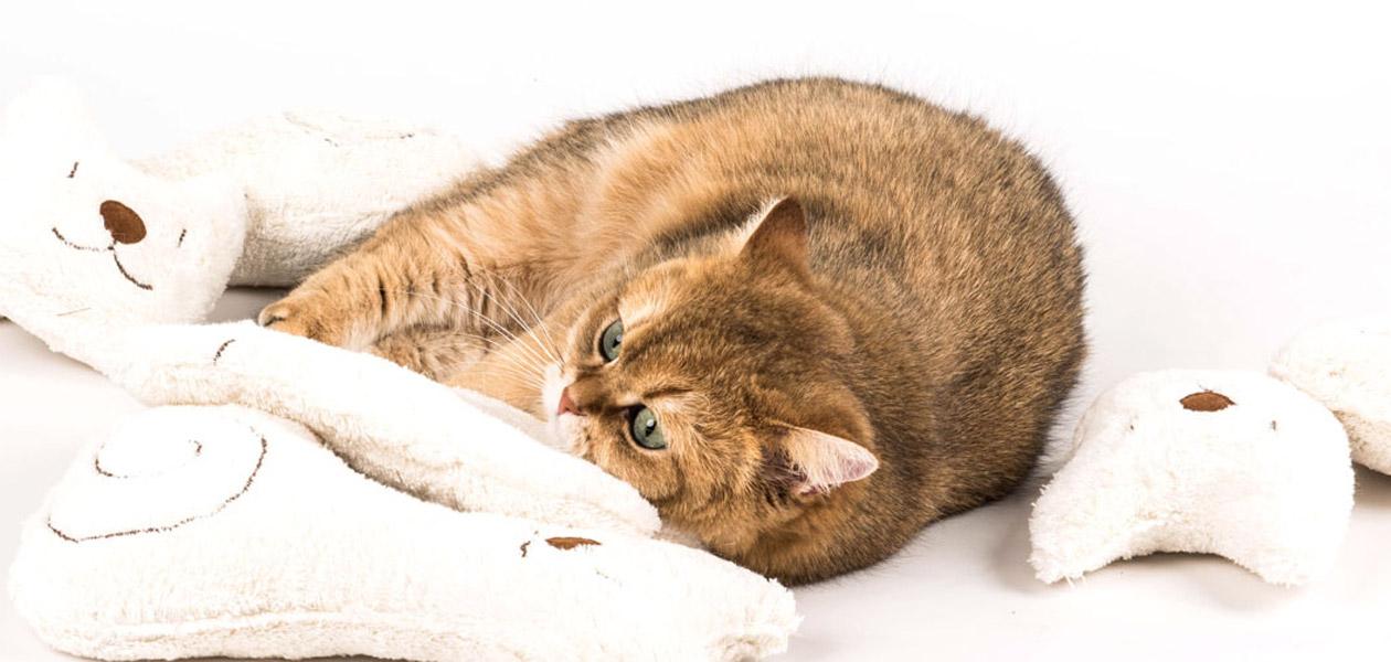 Catnip & Valerian Cat Toys