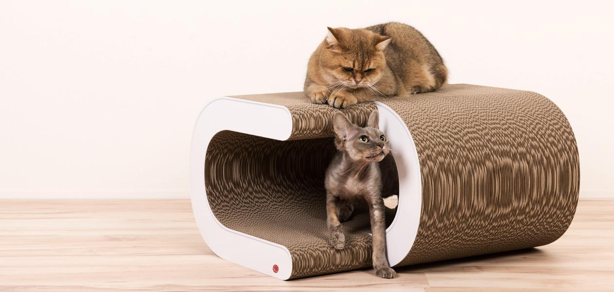cat-on Cardboard Furniture