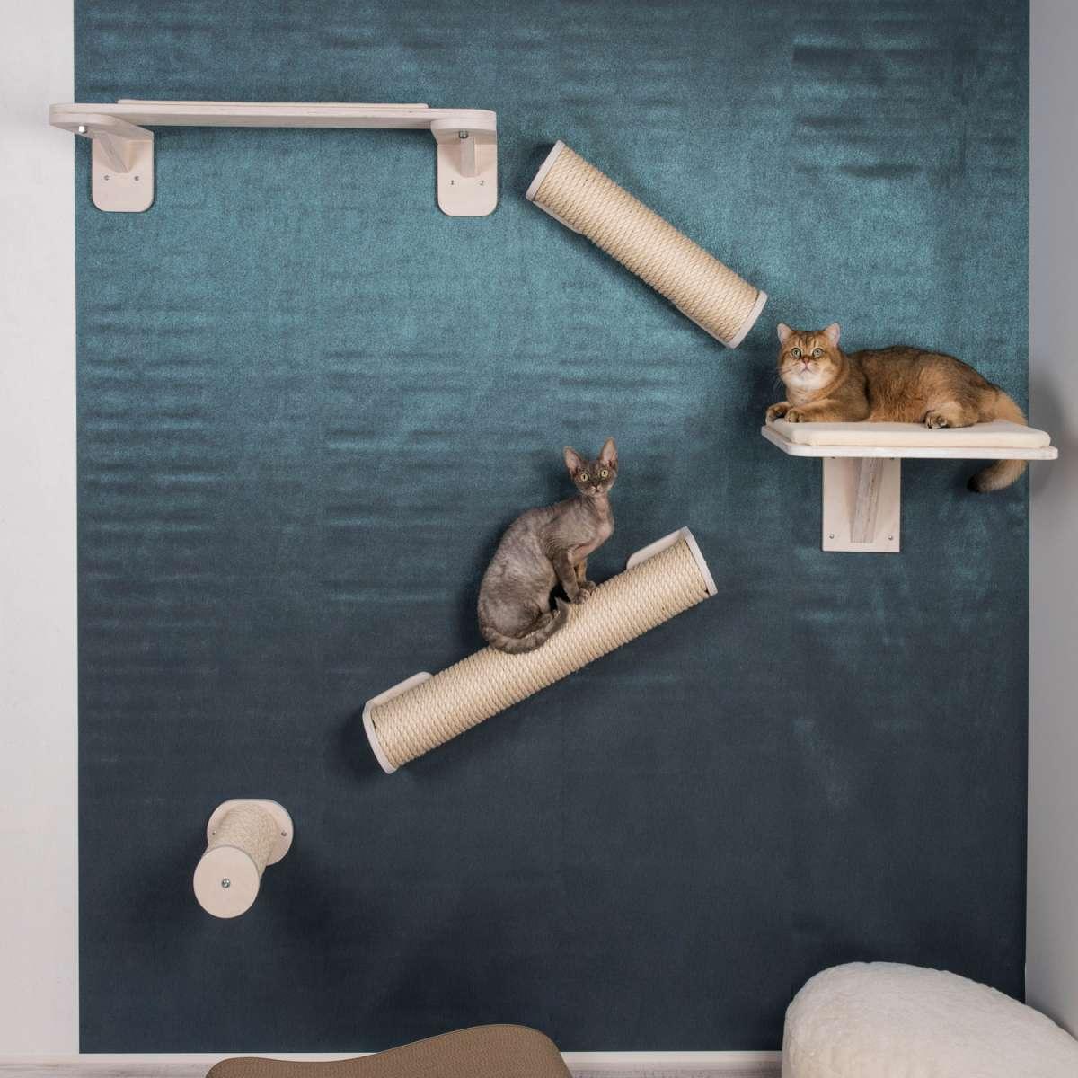представлена двумя дизайн комнаты для кошек фото центре площади огромный